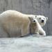 Bilder zur Sendung: Eisbär, Affe & Co.
