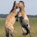 Abenteuer Erde: Theos Tierwelt - Aus dem Zoo in die Freiheit