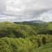Wildes Rumänien - Land der Bären und Wölfe