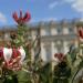 Königliche Gärten