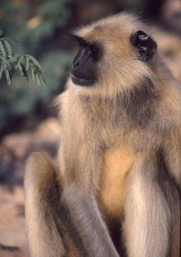 Ein Tag in der Wildnis - Überleben in Indien