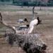 Bilder zur Sendung: Das Pantanal