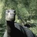 Bilder zur Sendung: Dinosaurier