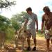 Das Waisenhaus für wilde Tiere