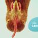 Frei Schnauze - Das Tiermagazin