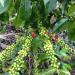 Kaffee - Die Suche nach der perfekten Bohne - Teil 2