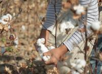 Schmutzige Baumwolle - Sklaven der Textilindustrie