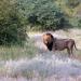Das umstrittene Wildreservat in der Kalahari