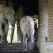 Elefanten im Hotel