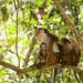 Wildes Sri Lanka - Waldwelt (2/3)