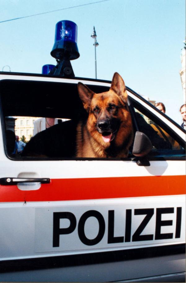 Bild 1 von 15: Rex im Polizeiauto