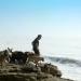 Bilder zur Sendung: Der Hundeflüsterer