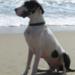 Bilder zur Sendung: Der Hundefl�sterer