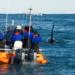 Bilder zur Sendung: Orcas - R�uber mit Familiensinn