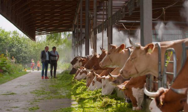 Bild 1 von 4: Fressende Milchkühe, Gut Rheinau GmbH.