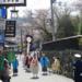 Sakura - Japan bl�ht auf
