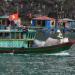 Die schwimmenden Dörfer der Halong-Bucht