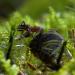 Die geheime Welt der Ameisen