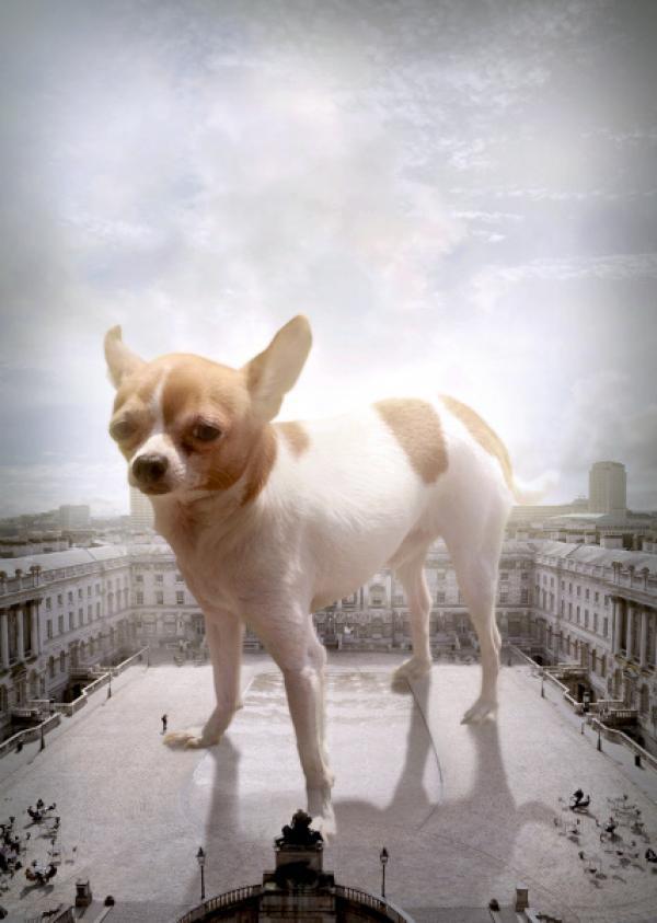 Bild 1 von 7: Wie groß können eigentlich Hunde werden? Gibt es ein Größenlimit für Säugetiere? Die zweiteilige Dokumentation \