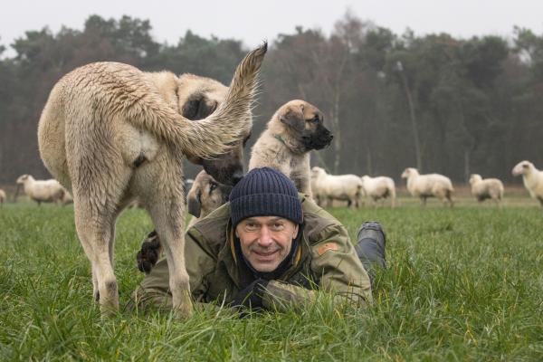 Bild 1 von 5: Dirk Steffens begleitet junge Herdenschutzhunde an ihrem ersten Tag. Die Kangals sind keine \