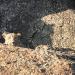 Der Fels der Leoparden