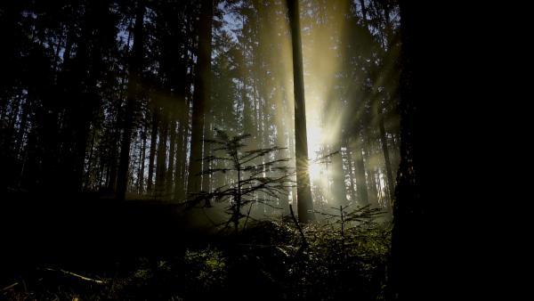 Bild 1 von 6: Sonnenaufgang im Nationalpark Bayerischer Wald.