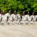 Bilder zur Sendung: Das weiße Ballett - Die Spanische Hofreitschule