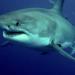 Auf Leben und Tod - Im Haifischbecken