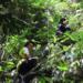 Bilder zur Sendung: Geheimnisse Asiens - Die sch�nsten Nationalparks