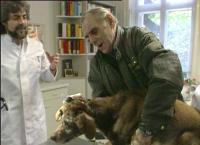 Die besondere Liebe zu Tieren