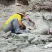 Geheimnisse der Urzeit - Das Dino-Puzzle