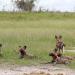 Mitbestimmung im Tierreich