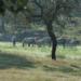 Bilder zur Sendung: Geboren in der Urzeit - Pferde