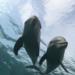 Bilder zur Sendung: Han Solo - Der einsame Delfin