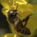 Unser Honig - Geliebt und gefährdet