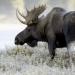 Ein Jahr in Kanadas Wildnis