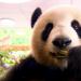 Die 100 kuriosesten Storys aus der Tierwelt