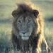 Ein Tag in der Wildnis - Leben am Äquator