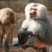 Bilder zur Sendung: Die Sieben Todsünden im Tierreich