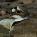 Bilder zur Sendung: Vögel hautnah
