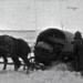 Bilder zur Sendung: Die Schlacht um Moskau