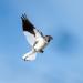 Von der Steppe in die Alpen - Vögel in Österreich