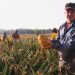 Herr Trüeb im Ananas-Land