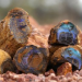 Outback Opal Hunters - Edelsteinjagd in Australien