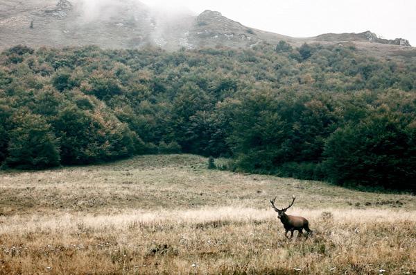 Bild 1 von 6: Renaturierung -- eine Methode, die die natürliche Dynamik von Flora und Fauna wiederherstellen und die Biodiversität in den natürlichen Lebensräumen steigern soll