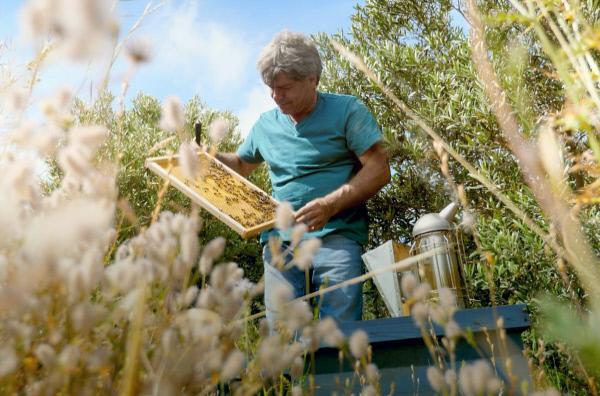 Bild 1 von 4: Carlo Amodeo zieht die Sizilianische Biene \