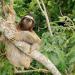 Die Tricks der Tiere - Zauber des Dschungels