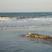 Bilder zur Sendung: Krokodile hautnah