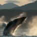 Wächter der Wale