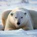 Bilder zur Sendung: Hannes Jaenicke im Einsatz für Eisbären